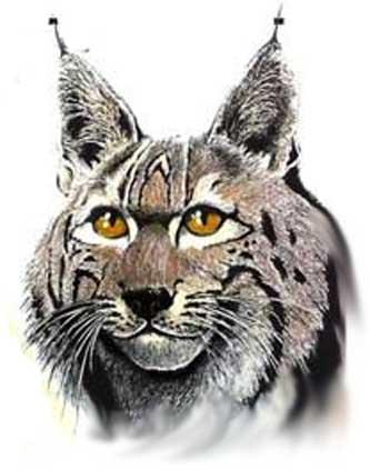 коты с ушами фото