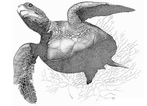 Черепаха плывёт вид снизу