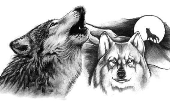 Волк волчица и еще волк на фоне луны