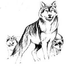 Волка охотятся